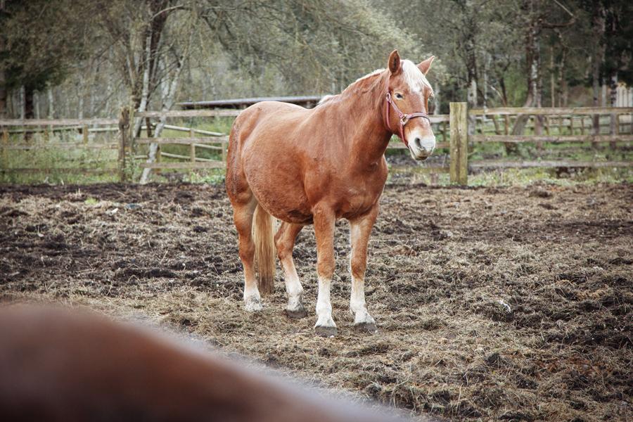 Sonia - Avelignese Bram's Ranch