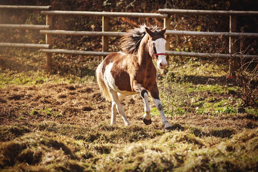 Gerry - Pezzato Bram's Ranch